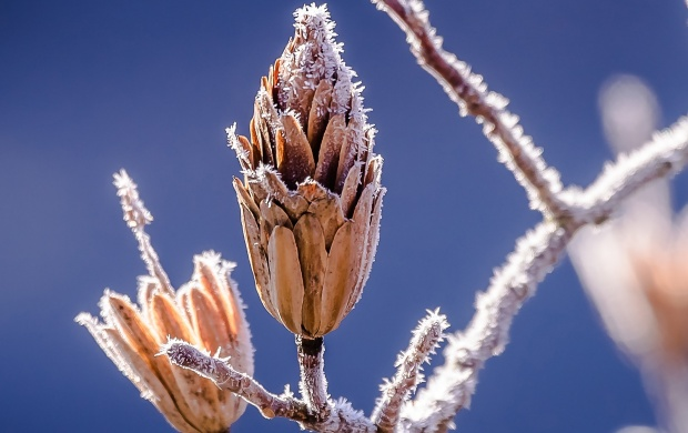 Frozen Branch (click to view)