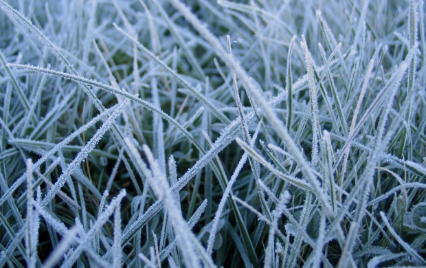 Frozen grass (click to view)