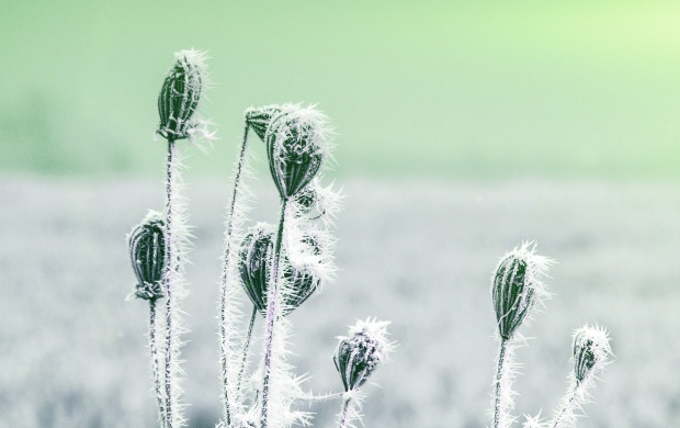Frozen Plants (click to view)