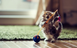 Funny Lovely Playful Kitten