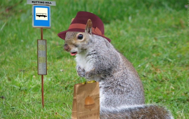 Funny Squirrel (click to view)