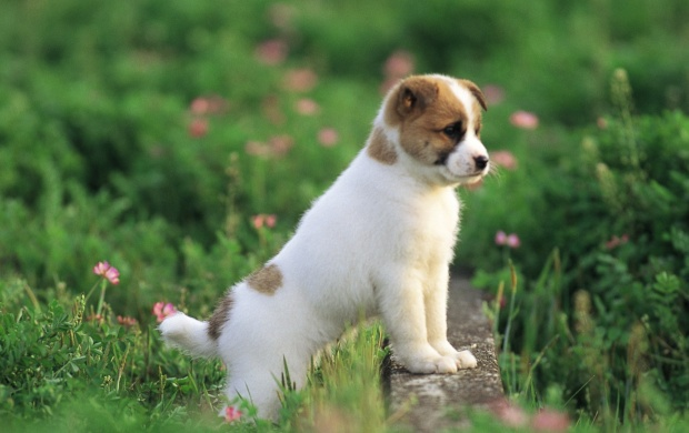 Garden Adventure Of The Little Puppy (click to view)