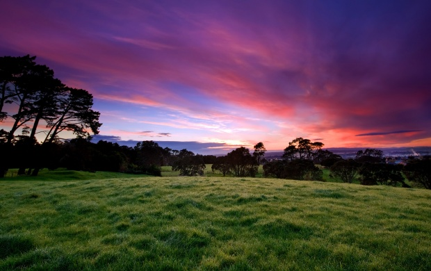 Grass Field and Purple Sky (click to view)