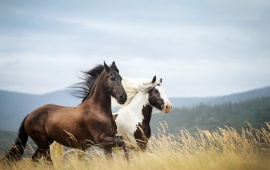 Horse HD Wallpapers Free Wallpaper Downloads Desktop