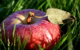 Grass In Apple Fruit
