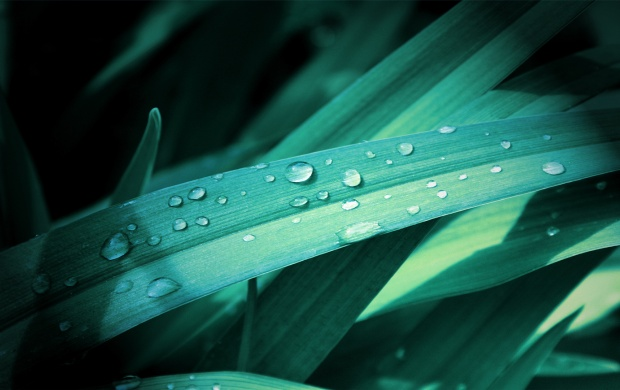 Grass Leaves On Drops (click to view)