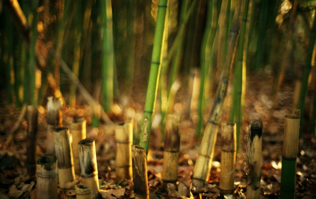 Green Bamboo Plant (click to view)