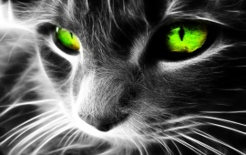 Green Eyes Cat
