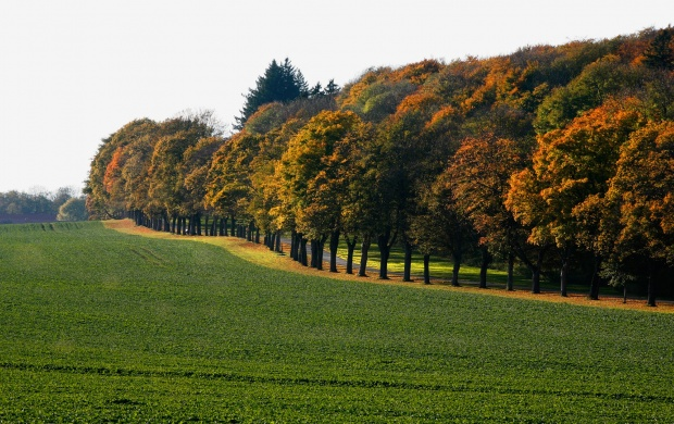Green Field and Trees (click to view)