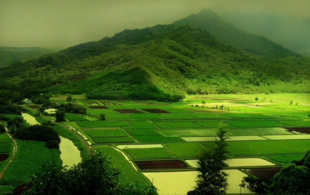 Green Fields (click to view)