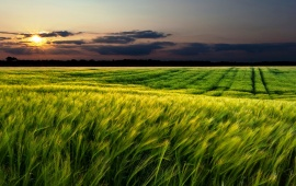 Green Fields Sunset Landscape