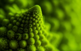 1561 Views Green Fractal Closeup