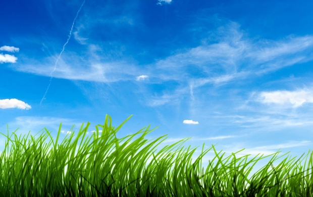 Green Grass And Blue Sky (click to view)