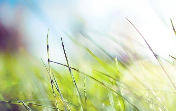 Green Grass Closeup (click to view)