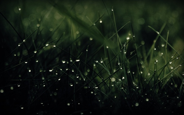 Green Grass Dew Drops (click to view)