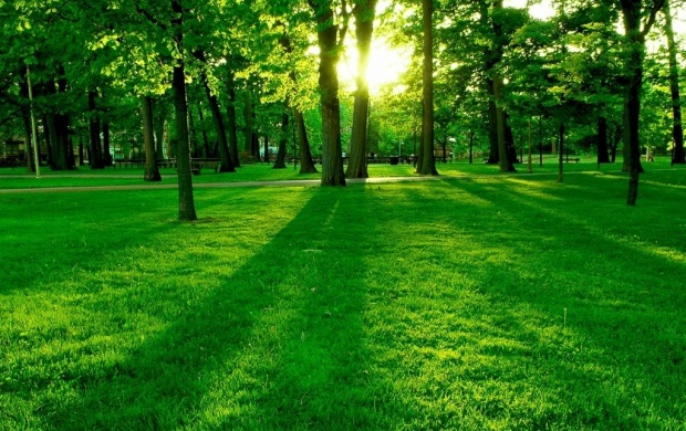 Green Grass Wallpaper (click to view)