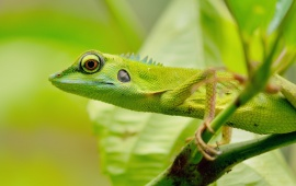 Green Lizard Eyes