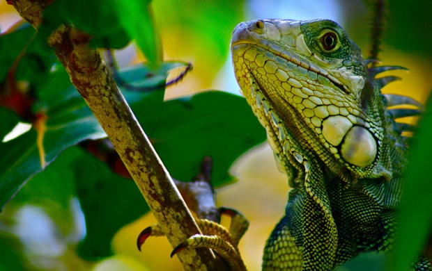 Green Lizard In Branch (click to view)