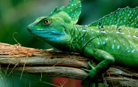 Green Lizard On Tree Branch