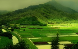 Green mountain and green fields