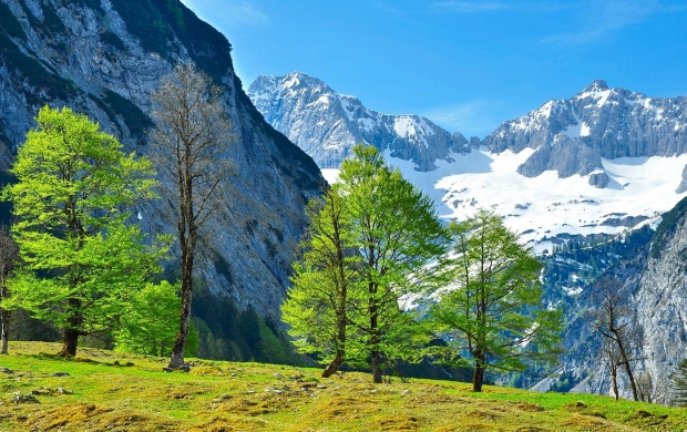 Green Mountain Grass And Trees  (click to view)