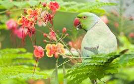 Green Parrot Bird With Flowers