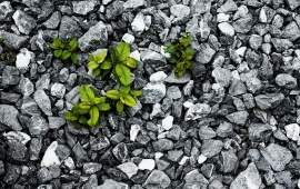 Green Plants on Grey Rocks