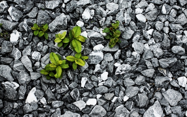 Green Plants on Grey Rocks (click to view)