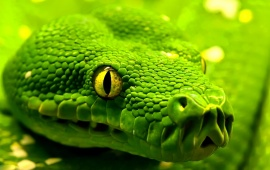 1573 Views Green Snake Closeup