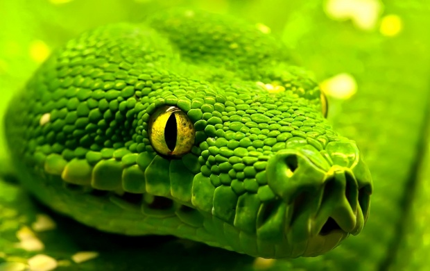 Green Snake Closeup (click to view)
