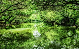 Green Trees Lake Reflection