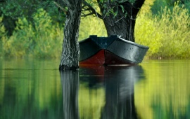 Green Water In Boat