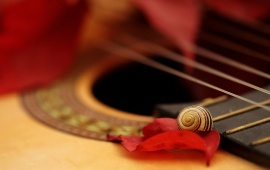 Guitar Snail And Rose Petals