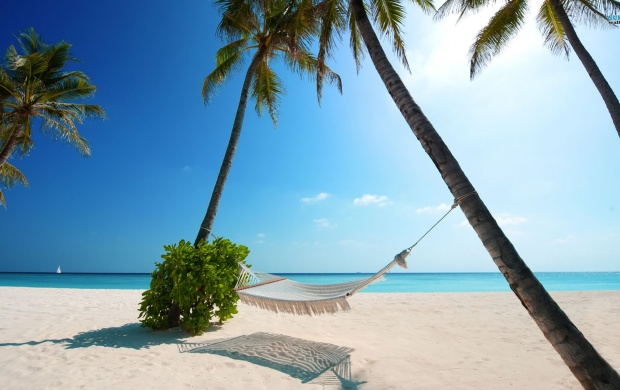 Hammock and Palms on a Beach (click to view)