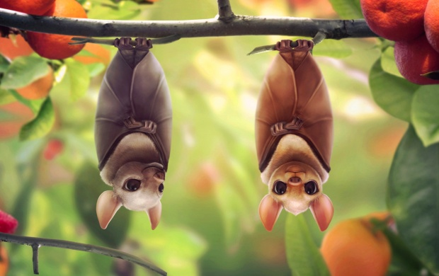 Hanging Bats (click to view)