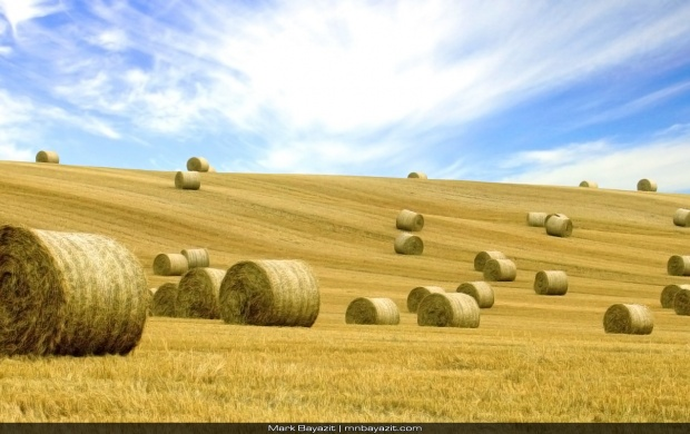 Haystack Rolls On The Field (click to view)
