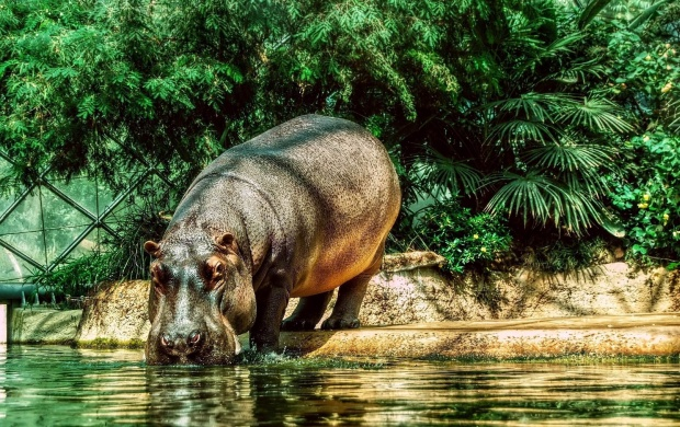 Hippo Drink Water (click to view)