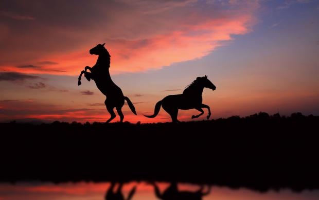 Horse Over Sunset (click to view)