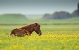 Horse Summer Field Flowers