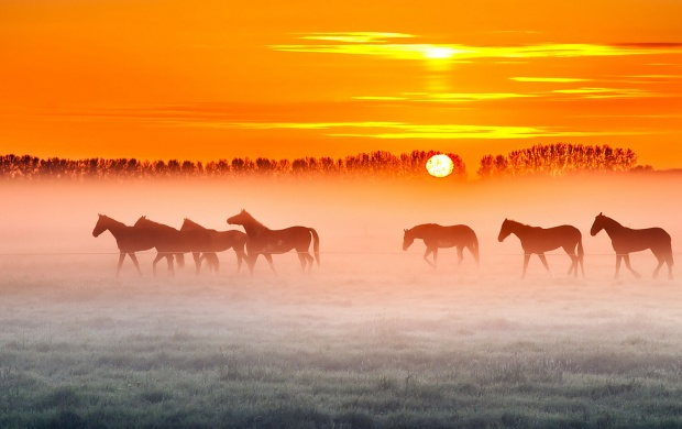 Horses Field Fog (click to view)