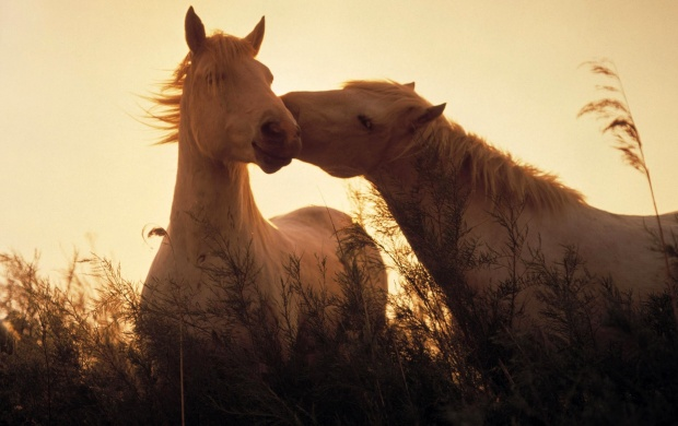 Horses In Love (click to view)