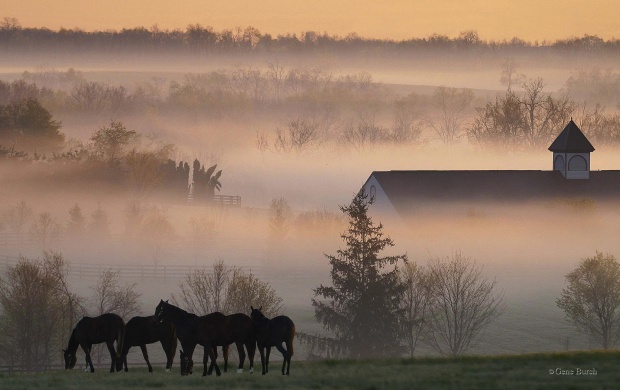 Horses in the farm (click to view)