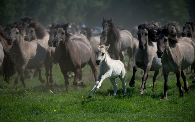Horses Race At Grassland (click to view)