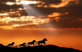 Horses Running At Sunset