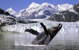 Humpback Whale in the Artic