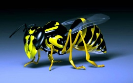 Insects Wasp