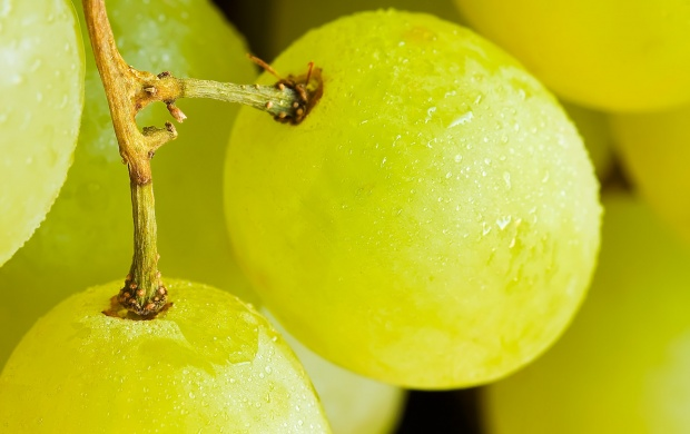 Juicy Green Grape (click to view)