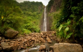 Jungle River Waterfall