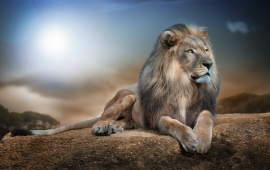 King Of Beasts Lion