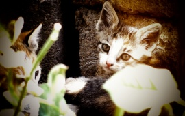 Kitten And Plants